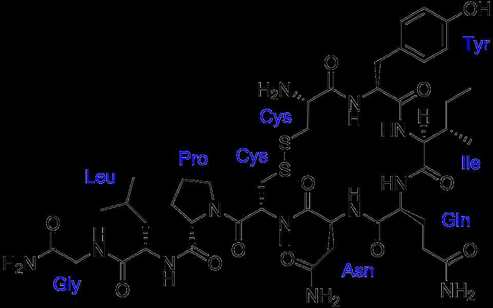 Ossitocina - Felicità