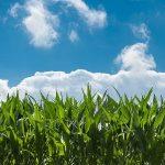 CRISPR/Cas9: l'ultima frontiera delle biotecnologie verdi